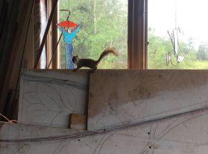 7. Medallion Gate admirer (squirrel)